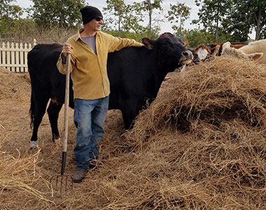 Volunteer with Cow